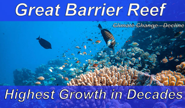 Great Barrier Reef experiencing 'record high' levels of coral coverage